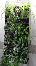 Picture of the HCAT living wall.
